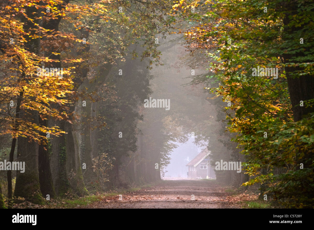 The Netherlands, Diepenheim, Autumn colours. Forest road - Stock Image