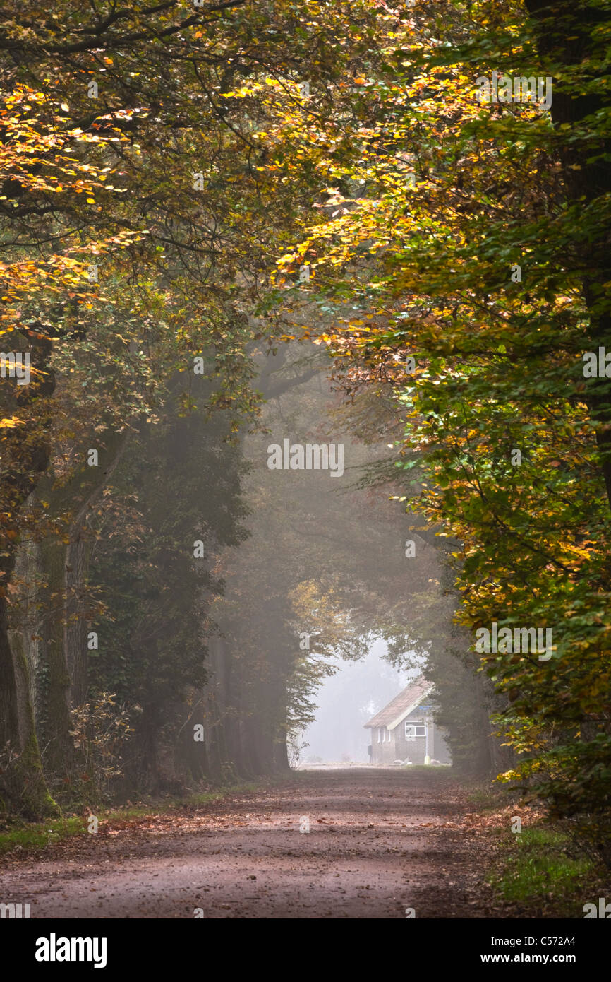 The Netherlands, Diepenheim, Autumn colours. Forest road. - Stock Image