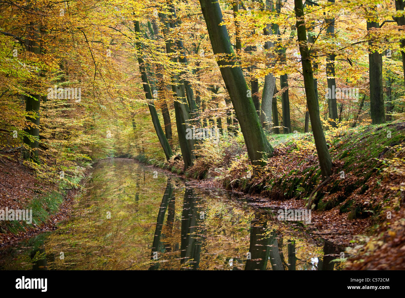 The Netherlands, Delden, Autumn colours. Trees reflecting in stream. - Stock Image