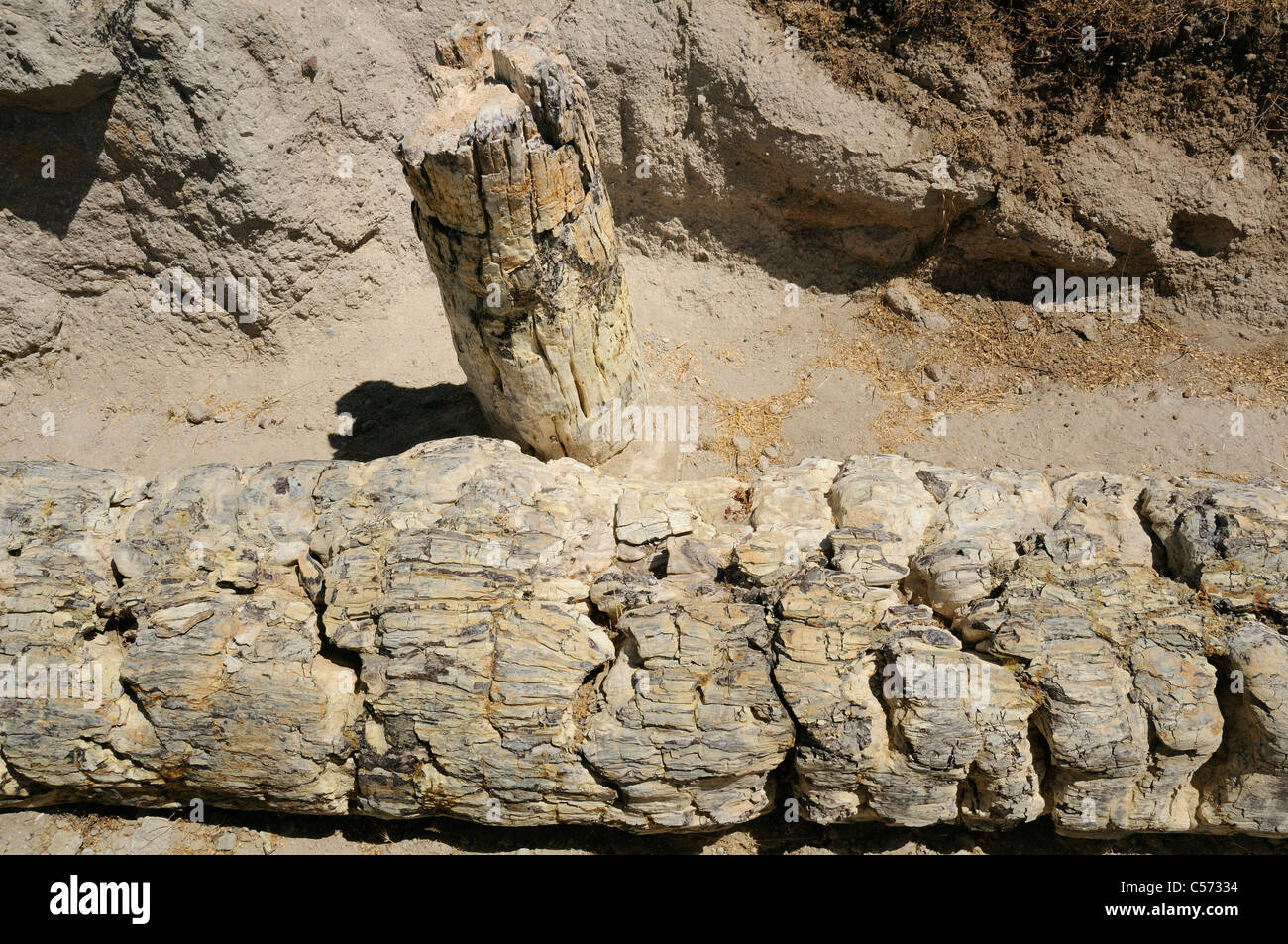 Petrified tree trunks from Miocene era  showing charring from ancient volcanic activity, Lesbos, Greece. - Stock Image