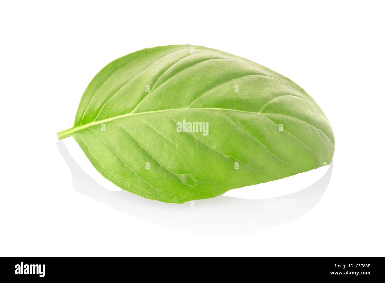 Single basil leaf cut out - Stock Image