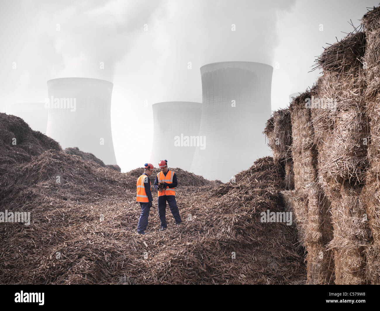 Workers with elephant grass biomass fuel Stock Photo