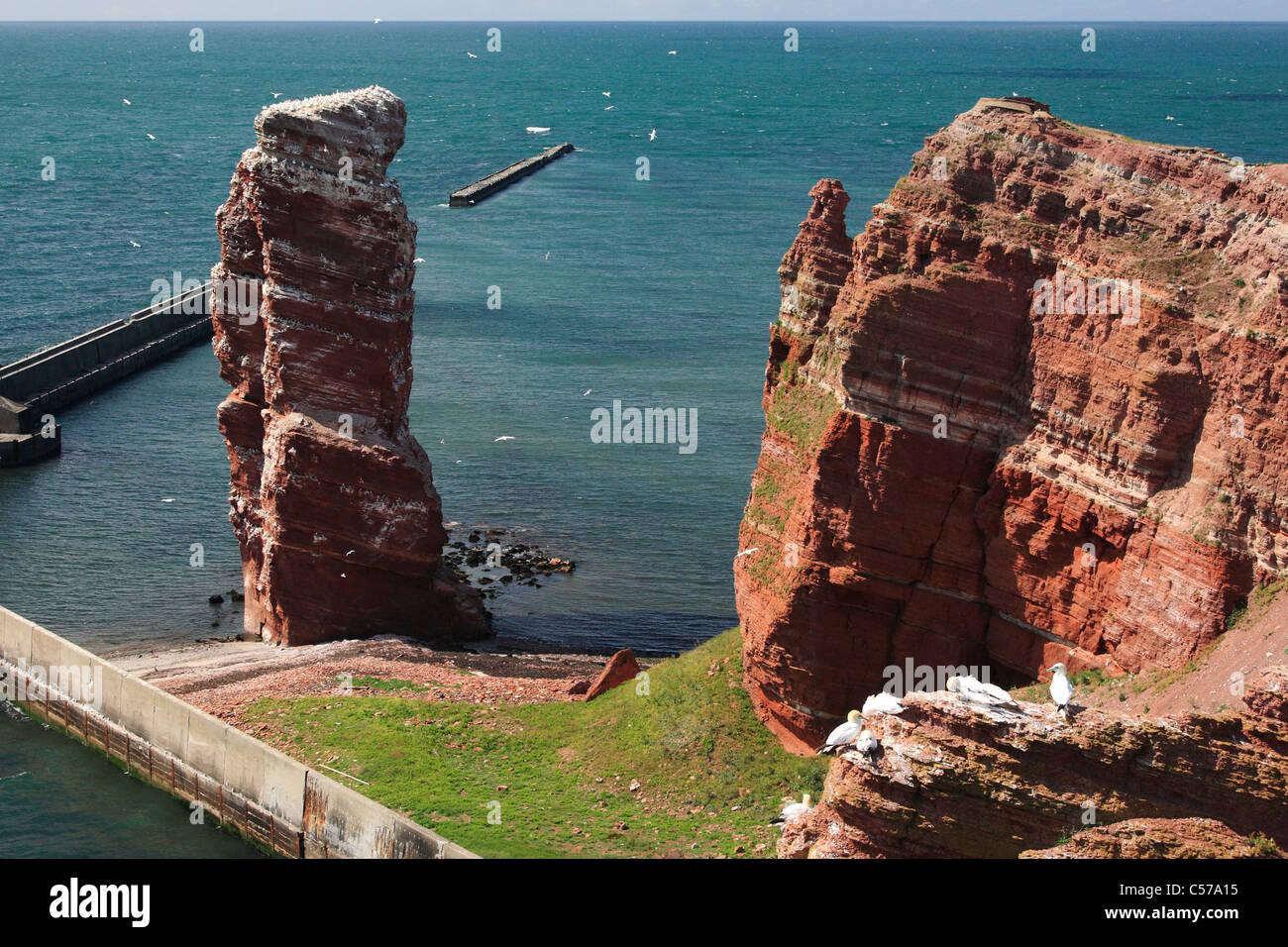"bird rock with landmark ""Lange Anna"" (""High Anna"") on island Helgoland (Heligoland) Stock Photo"