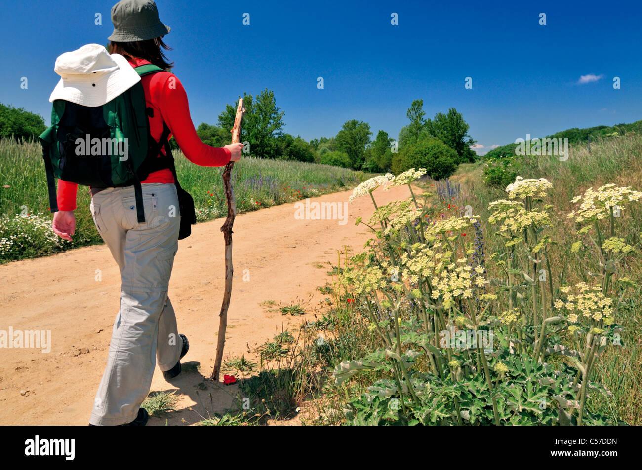 Spain, St. James Way: Pilgrim on the way to San Juan de Ortega at the Camino Frances - Stock Image