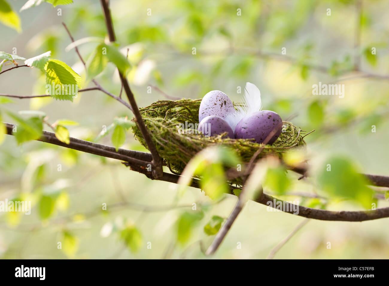 Speckled eggs in bird's nest - Stock Image