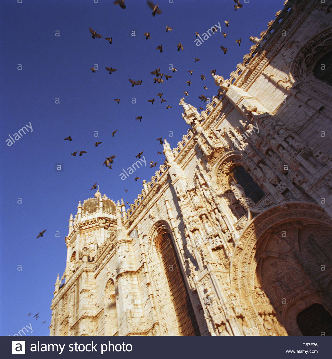 Birds flying over cathedral - Stock Image