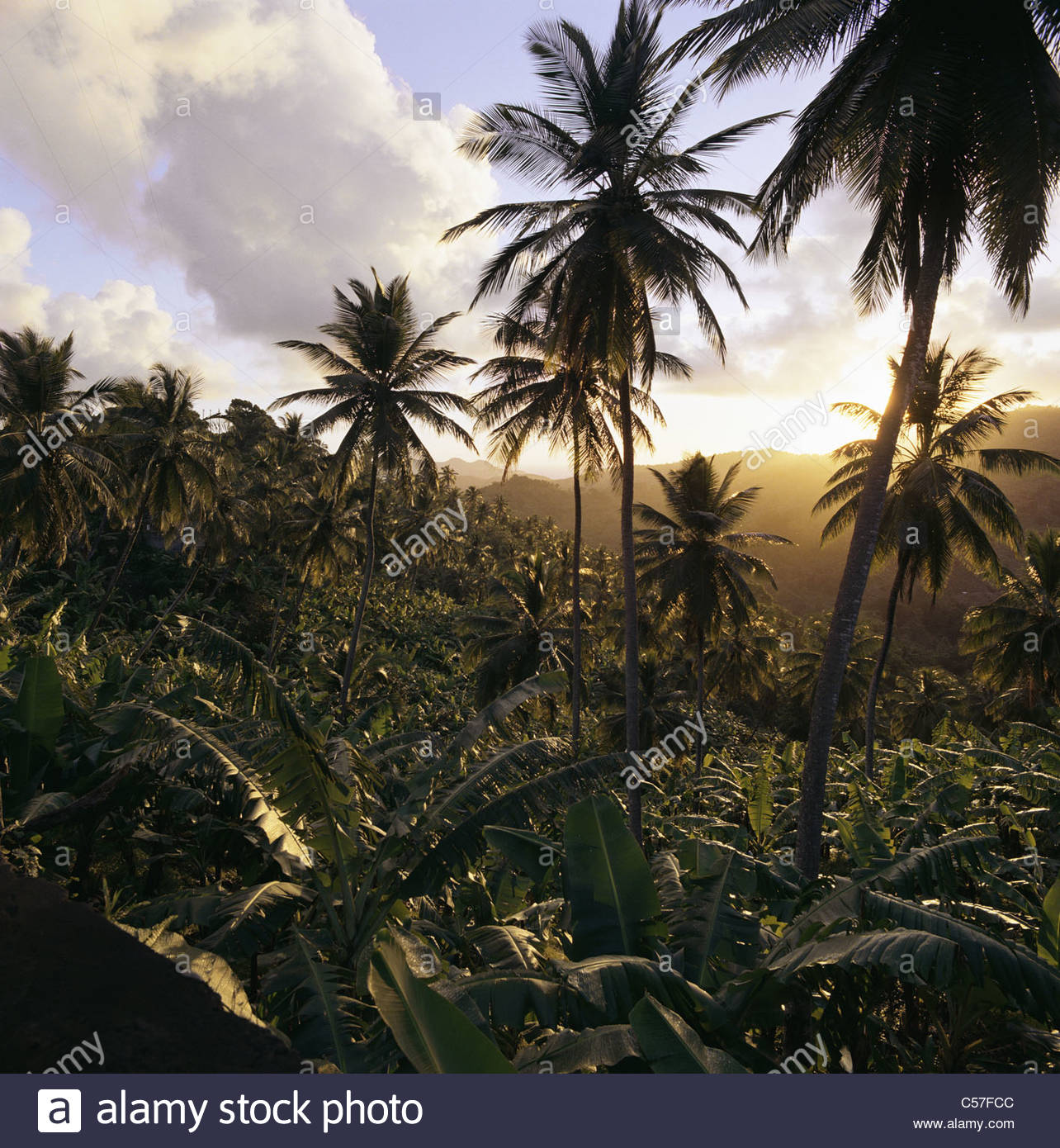 Palm trees in rural landscape - Stock Image