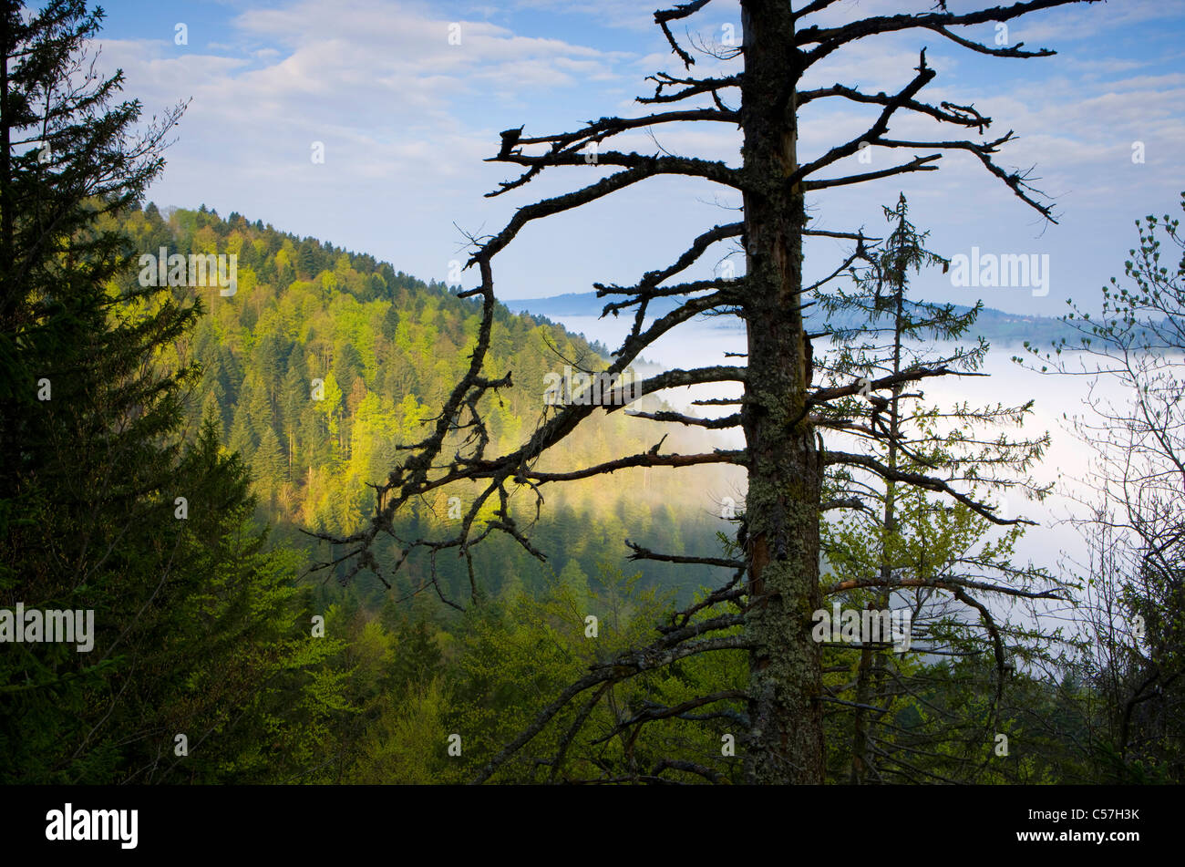 Doubs valley, Biaufond, Switzerland canton, Neuenburg, Neuenburg Jura, wood, forest, fog, valley, wood - Stock Image