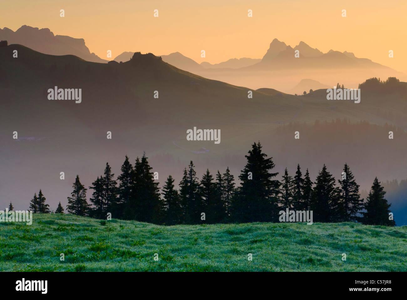 Pays d'Enhaut, Switzerland, Europe, canton Vaud, alp, wood, forest, firs, mountains, morning mood, sunrise - Stock Image