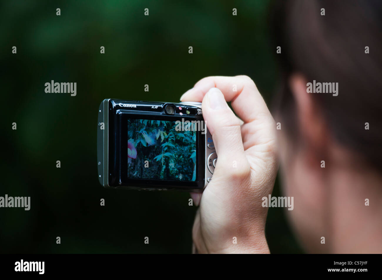 Ecotourism ecotourist in tropical rainforest with digital compact camera photographing colibris - Stock Image