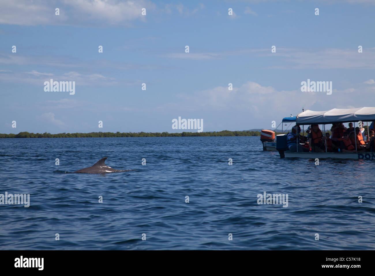Ecotourism doplhin watching tour Bocas del Toro - Stock Image