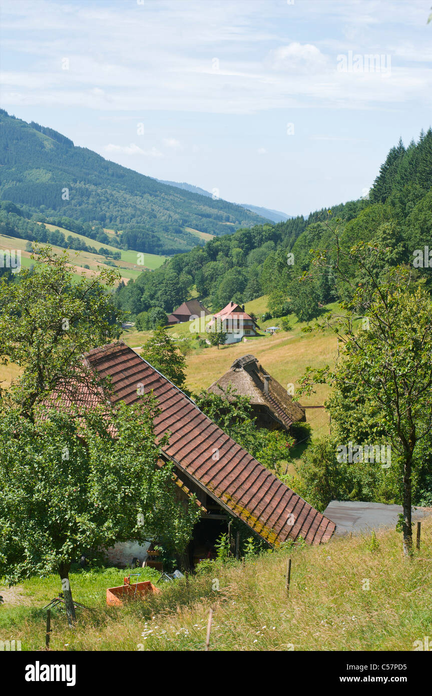 Different farmhouses with barns in a green mountainous landscape in Schwarzwald, Baden-Wurttemberg, Germany - Stock Image