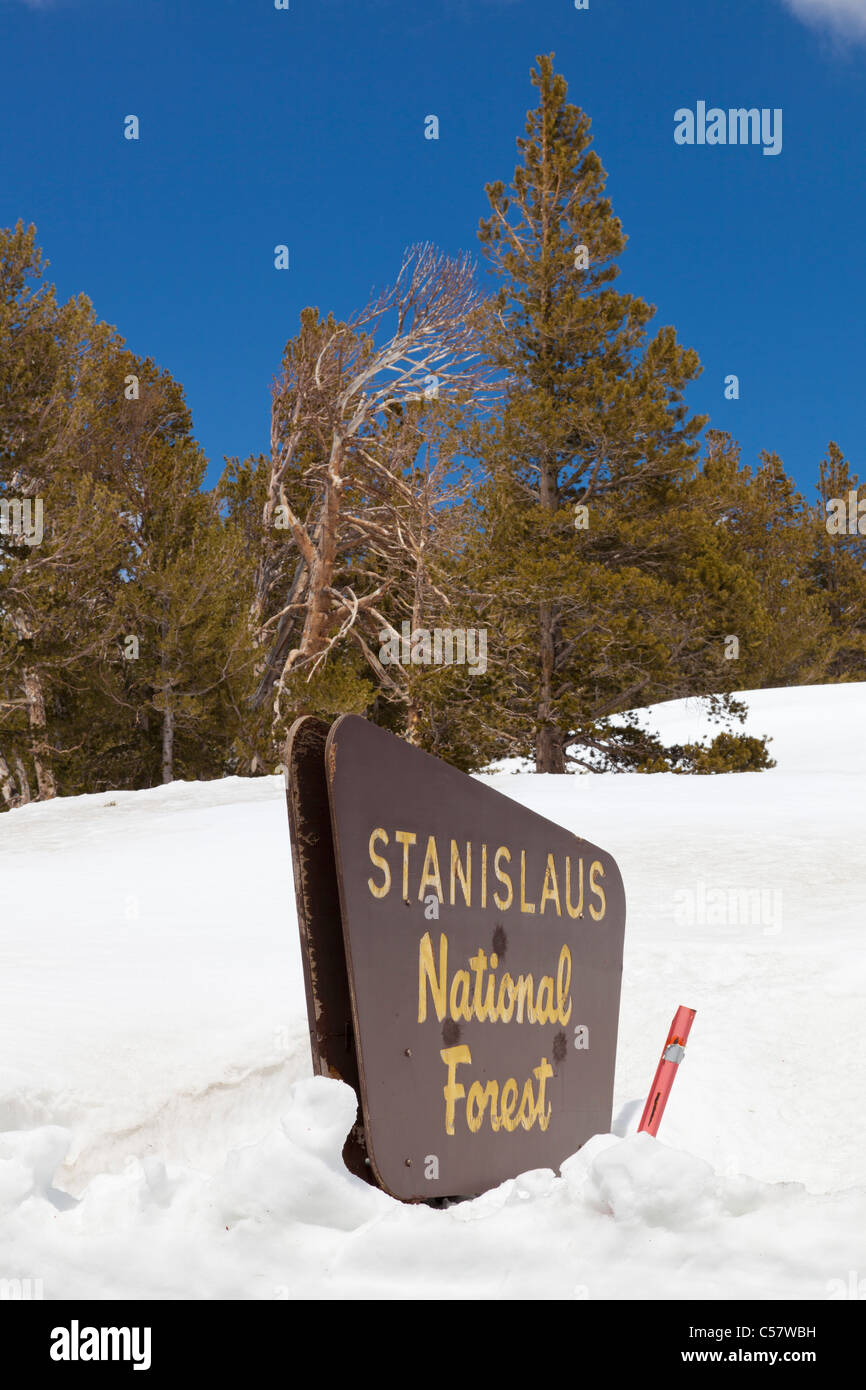 Stanislaus national forest sign on Sonora Pass buried and covered in snow California USA - Stock Image