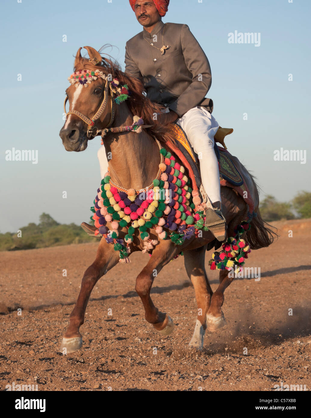 Horse Rider India Indian Tradition Rajasthan Man Stock Photo Alamy