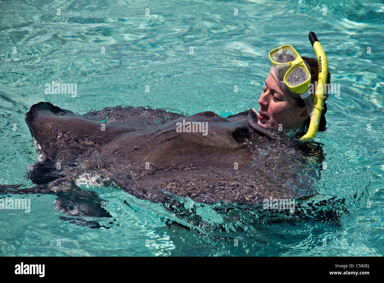 People interact with the stingrays at Stingray City, Cayman Islands - Stock Image