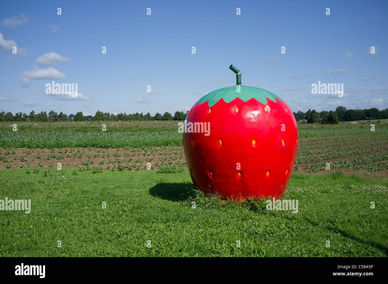 Large Strawberry advertising PicK Your Own at Grays Farm - 1 - Stock Image