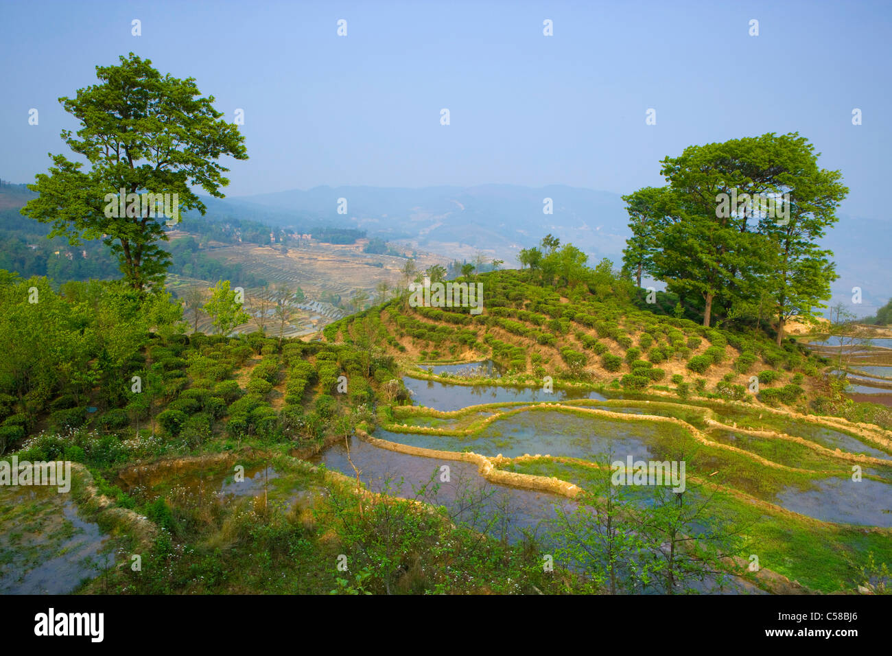 Yuanyang, China, Asia, rice terraces, growing of rice, rice fields, agriculture, water, trees, spring - Stock Image