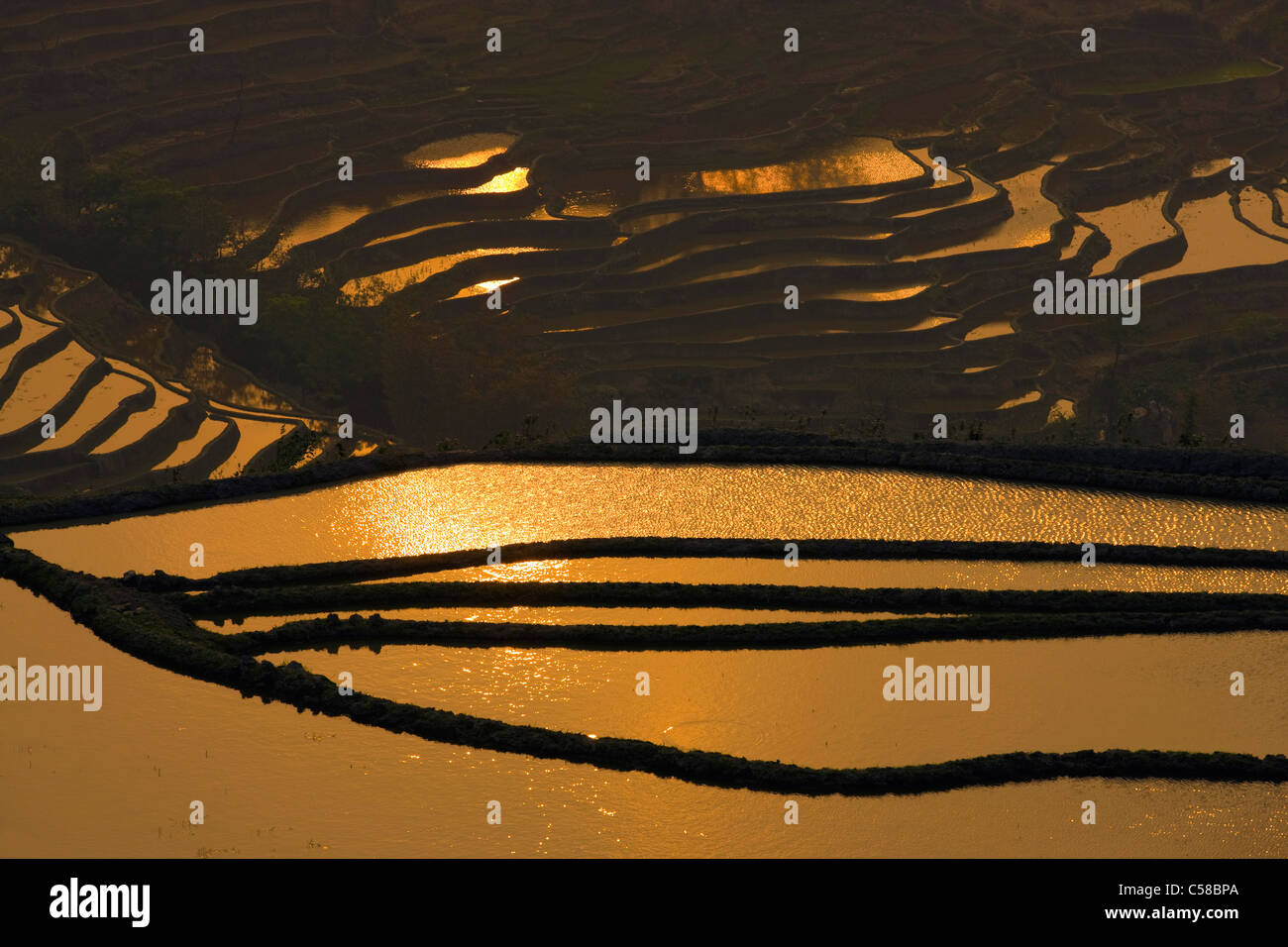 Yuanyang, China, Asia, rice terraces, growing of rice, rice fields, agriculture, water, reflection, evening light - Stock Image