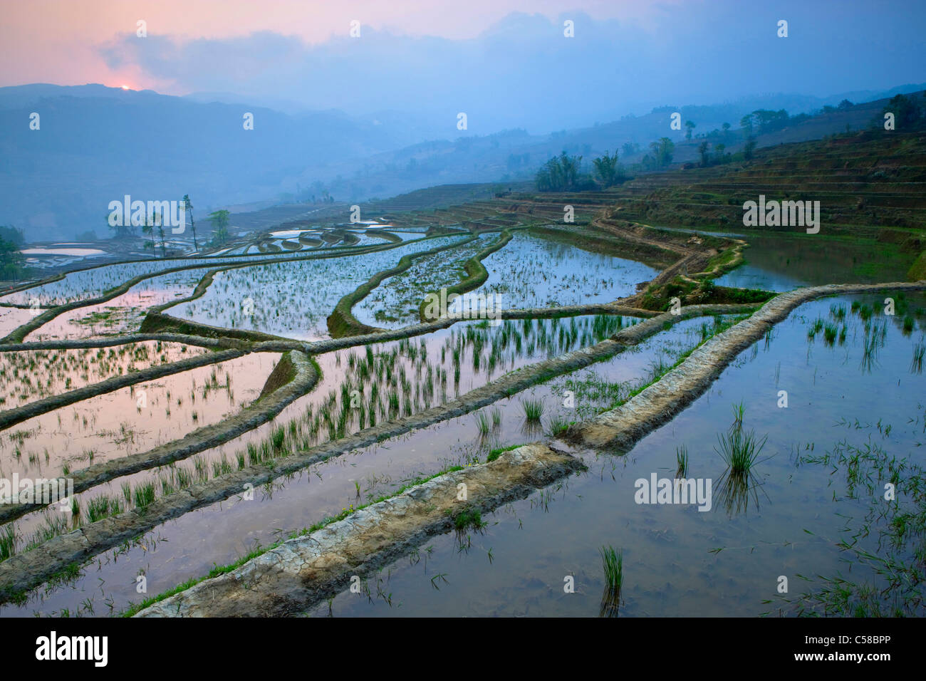 Yuanyang, China, Asia, rice terraces, growing of rice, rice fields, agriculture, water, morning light, sunrise, - Stock Image