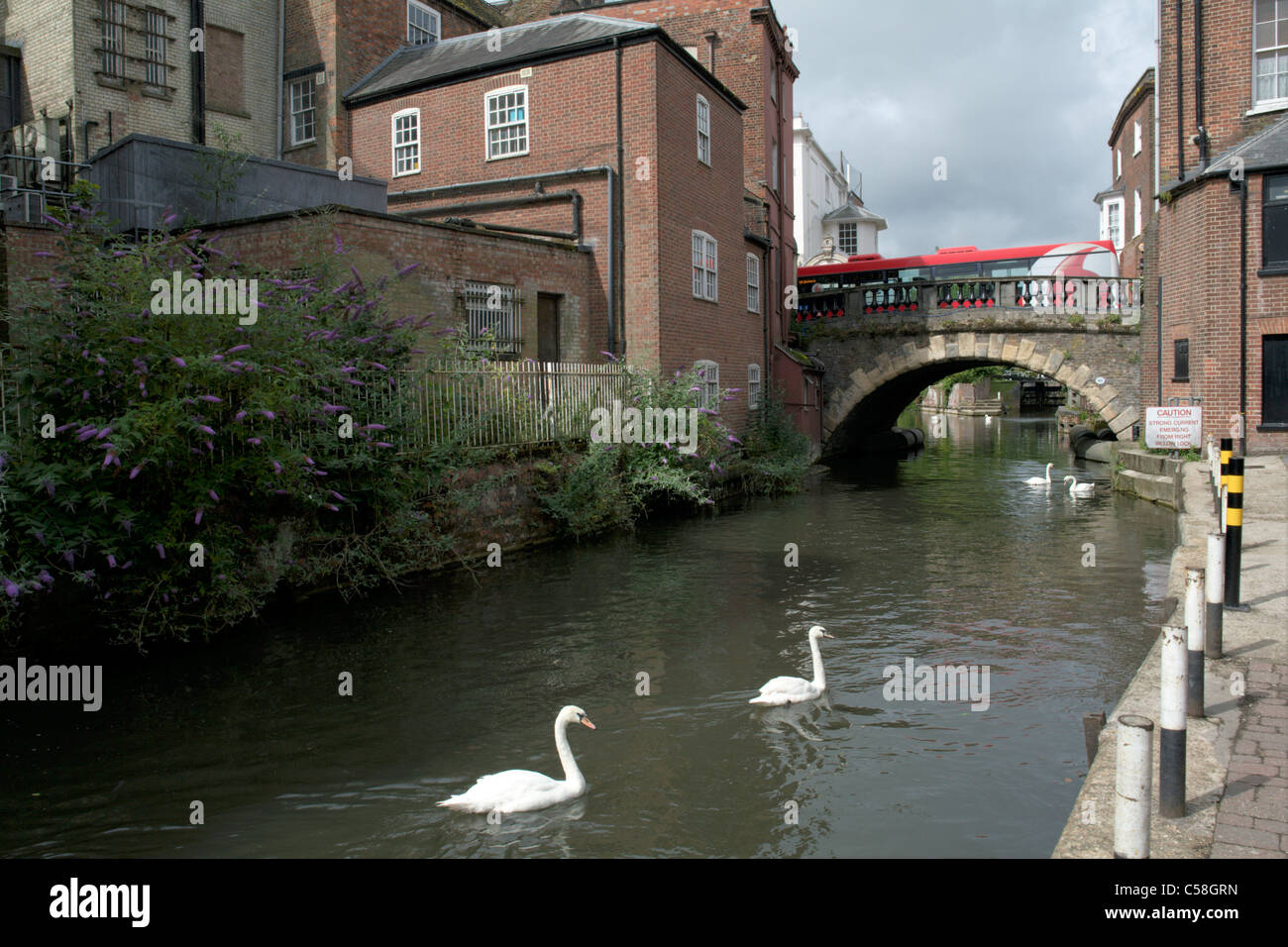 Kennet and Avon canal side with bridge swan and red bus Newbury Berkshire England UK - Stock Image