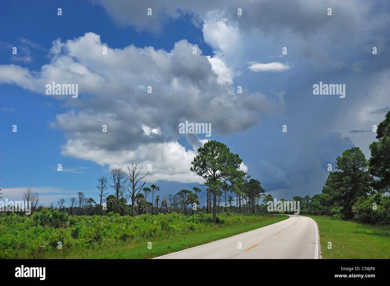 Storm clouds, building up, Merritt Island, National Wildlife Refuge, Florida, USA, United States, America, road - Stock Image