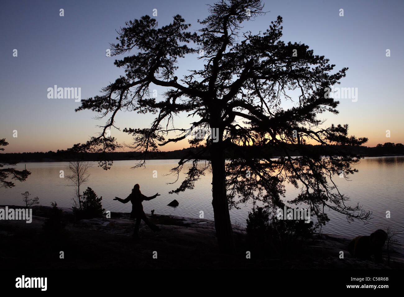 Silhouette of a pine tree at a lake in the evening - Stock Image