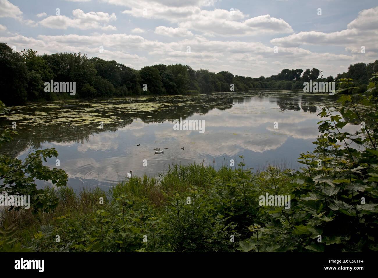 leg o mutton lake & nature trail richmond london england - Stock Image