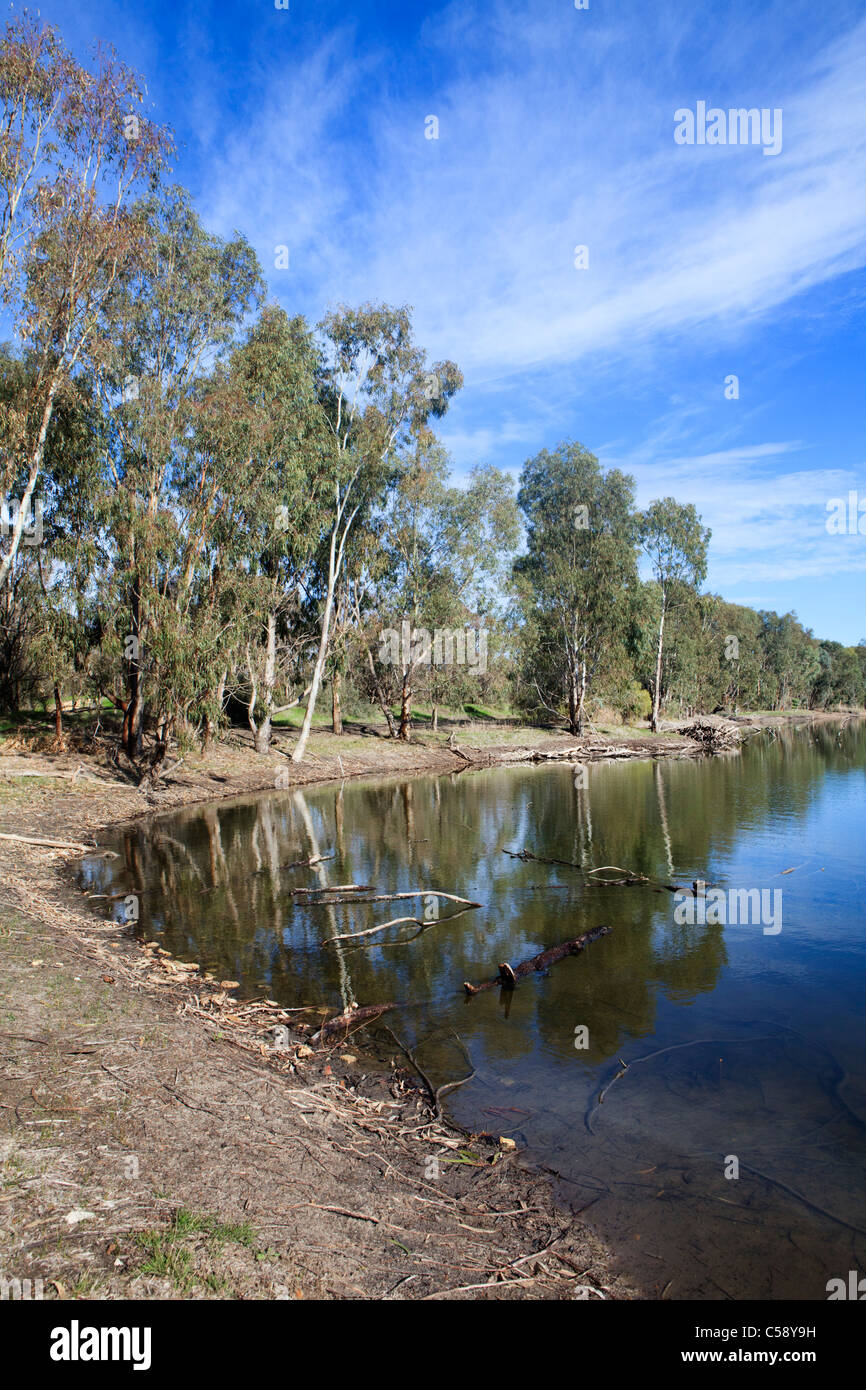 Eucalyptus trees growing beside a lake at the Aloca  Wellard Wetlands in Baldivis, Perth,  Western Australia - Stock Image