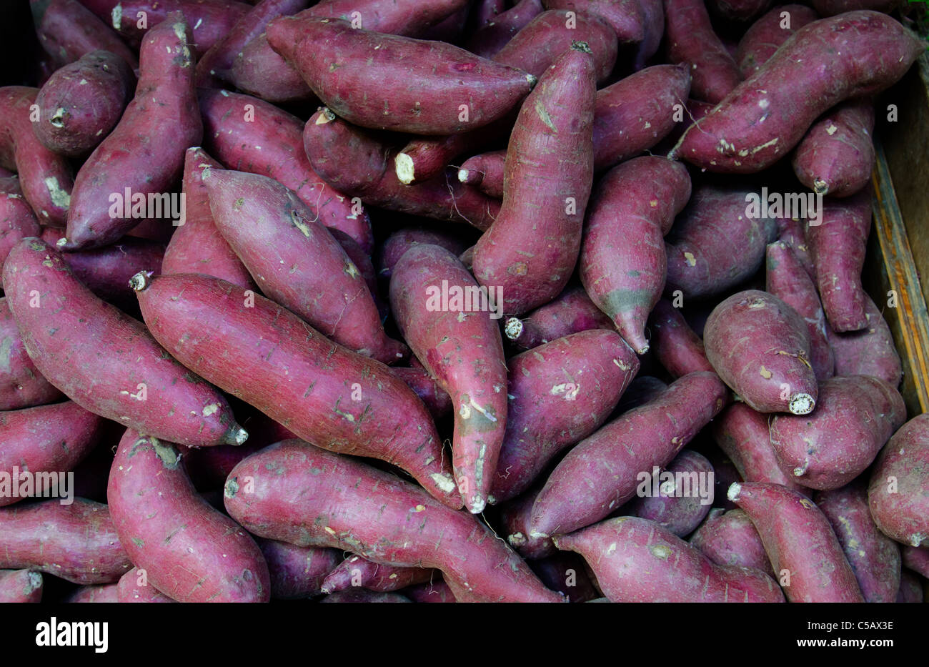 Red skinned sweet potatoes in a farmers market - Stock Image