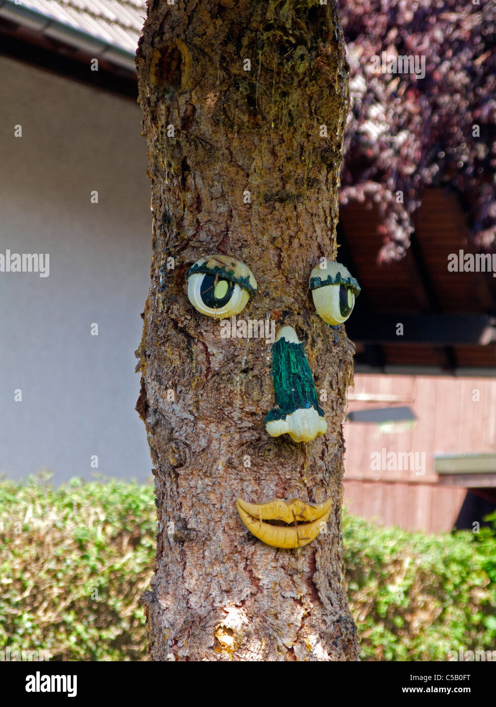 Baumgesicht in Bauerngarten, Sasbachwalden, Schwarzwald, tree face in Sasbachwalden, Black Forest - Stock Image