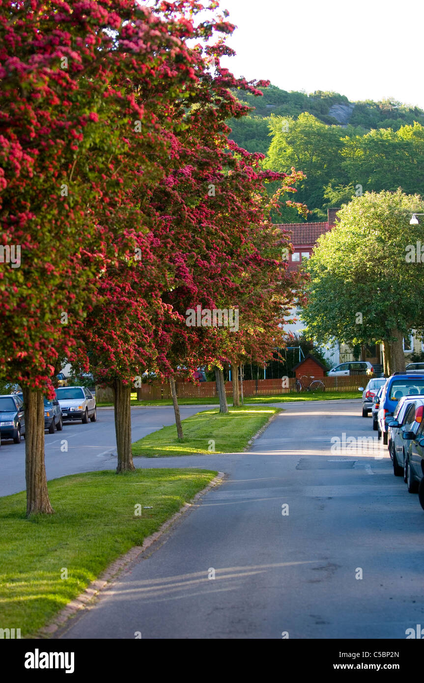 Cropped parked vehicles on road along trees - Stock Image