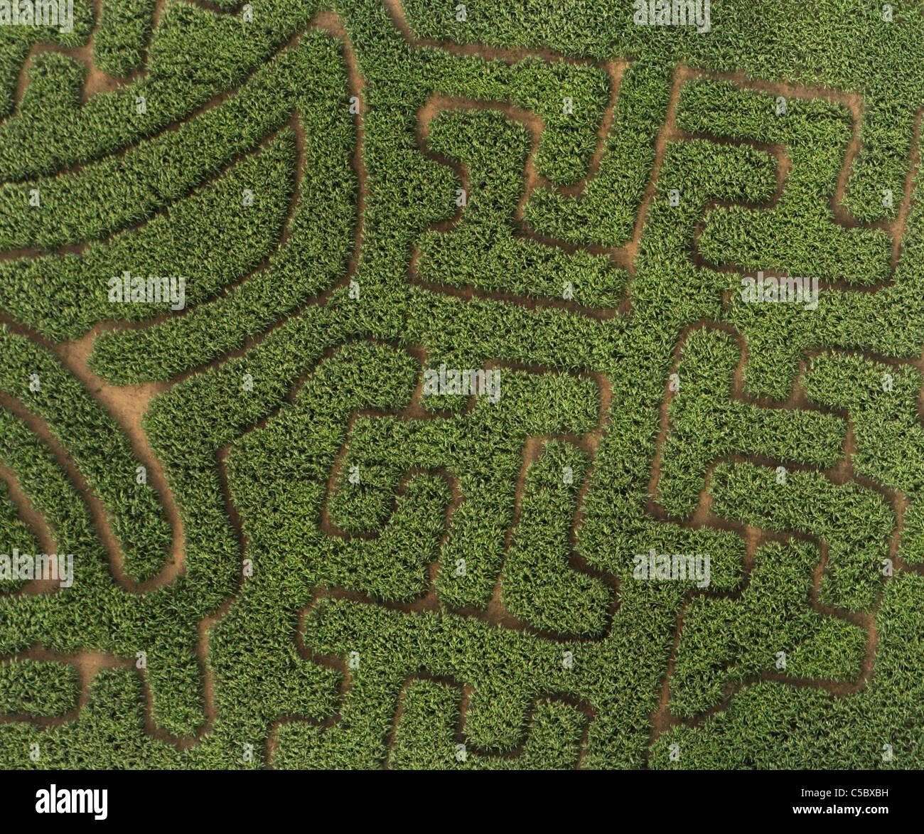 Maize maze in Derbyshire UK - Stock Image