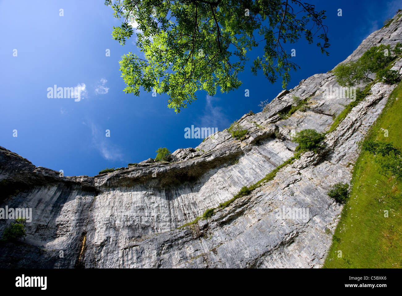 Looking up at the amphitheatre shaped cliffs of Malham Cove, Malhamdale, Yorkshire Dales - Stock Image