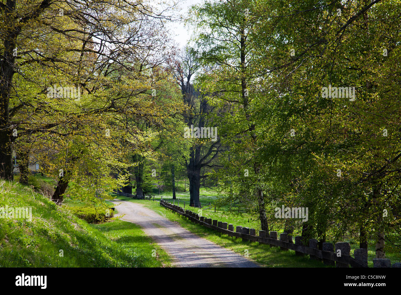 Country road lane through spring green landscape Sweden - Stock Image