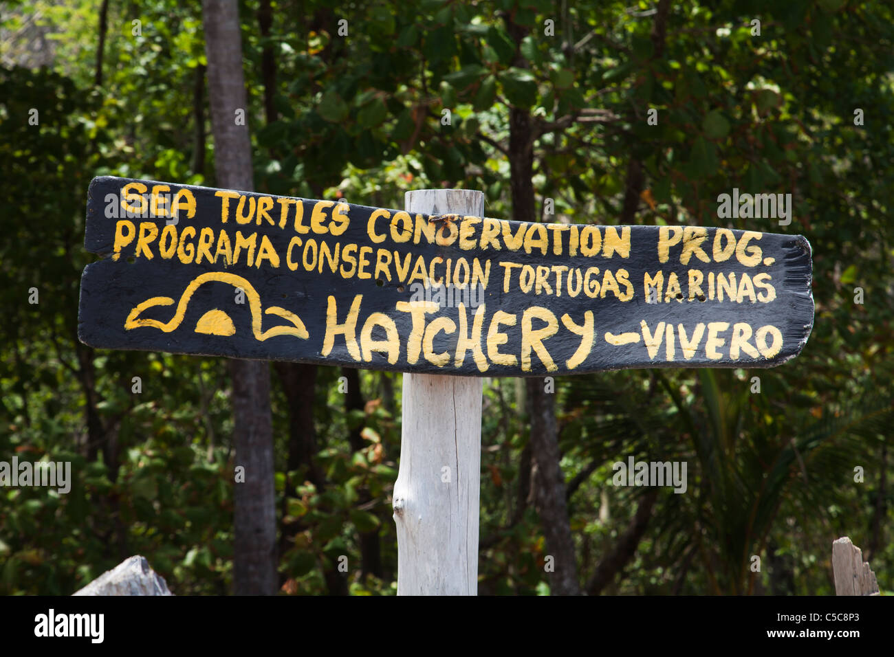 Sea Turtle conservation project Montezuma Costa Rica - Stock Image