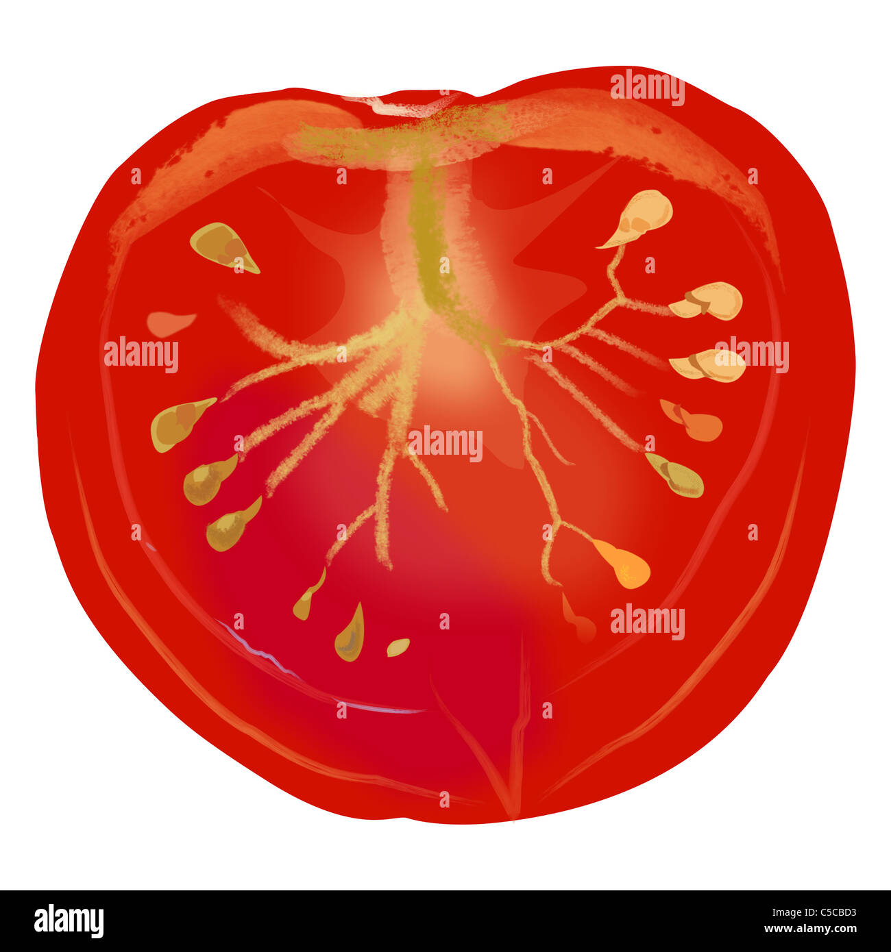 Drawing of a slice of tomato. - Stock Image