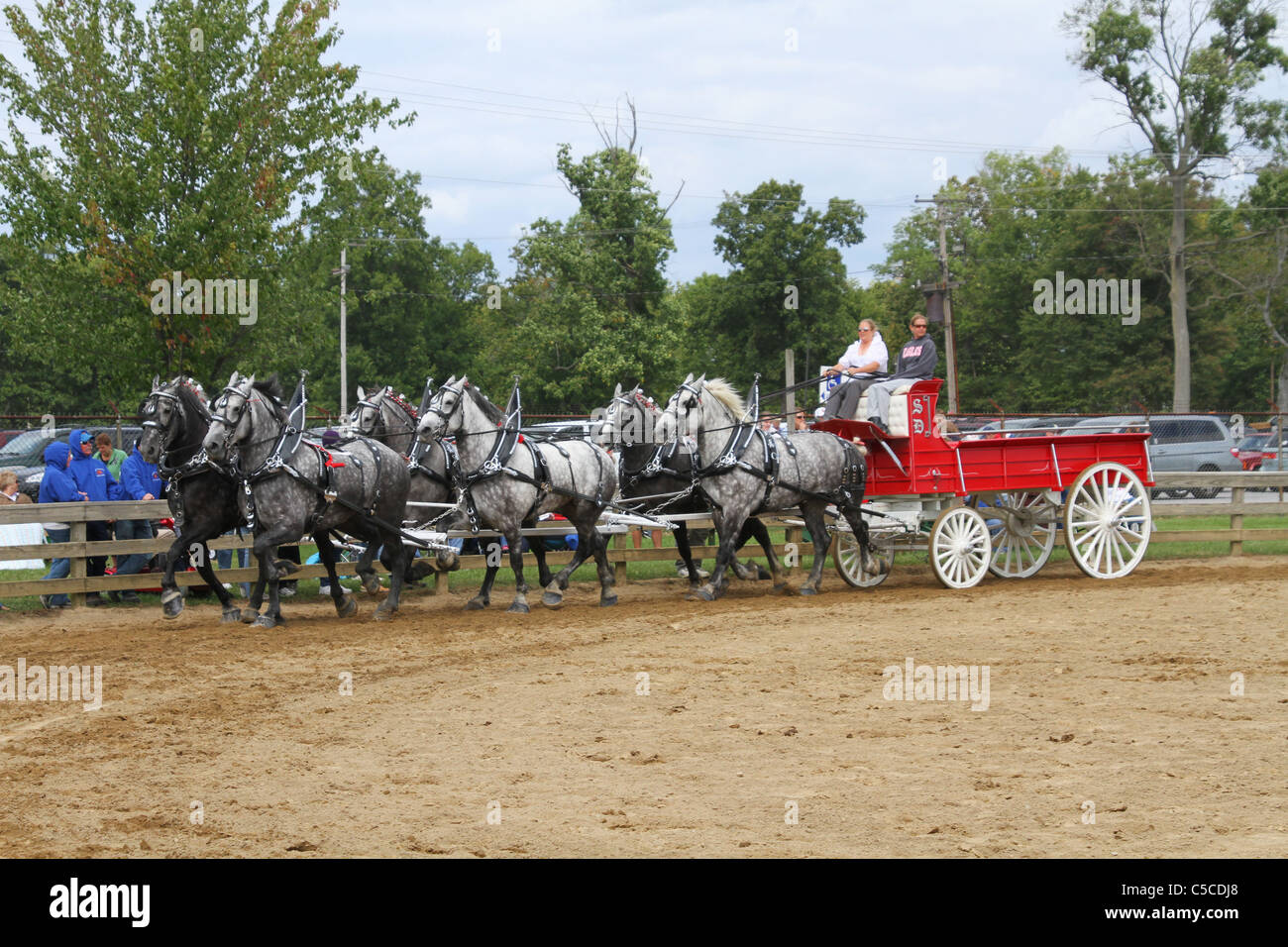 Draft Horses Pulling A Hitch Wagon. Workhorses with harnesses. - Stock Image
