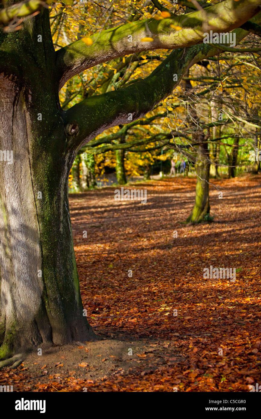 Autumn in Hampstead Heath, London, England, UK - Stock Image
