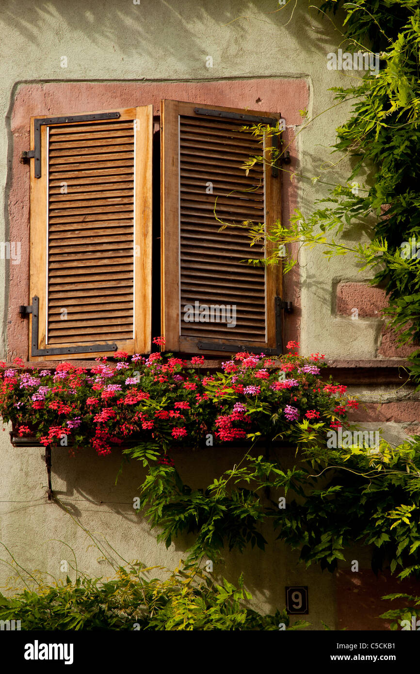 Early morning sunlight on shutters and flower box in Riquewihr, along the Wine Route, Alsace Haut-Rhin France - Stock Image
