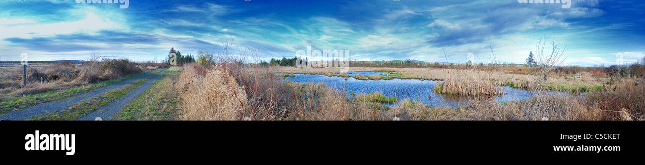 Panorama of a dirt road next to a swamp that is showing signs of life - Stock Image