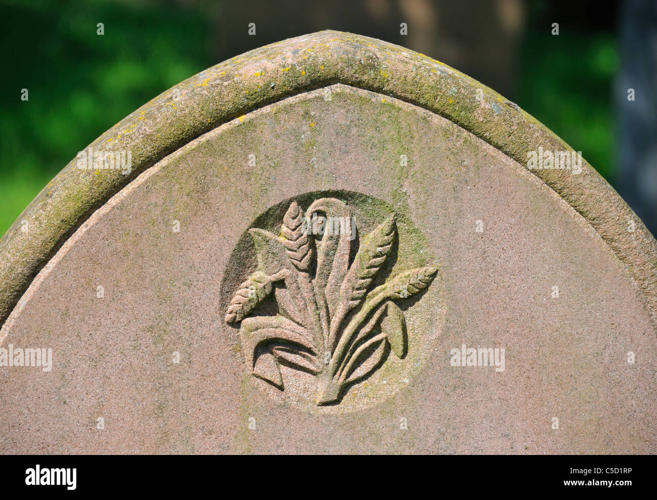 Ears of corn, detail of gravestone. Church of Saint James, Temple Sowerby, Cumbria, England, United Kingdom, Europe. - Stock Image