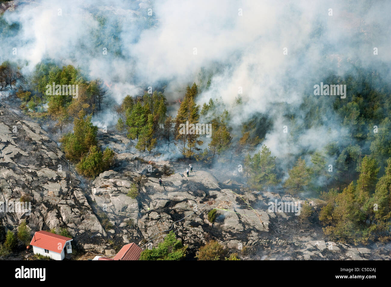 Top view of trees and smoke in forest fire - Stock Image