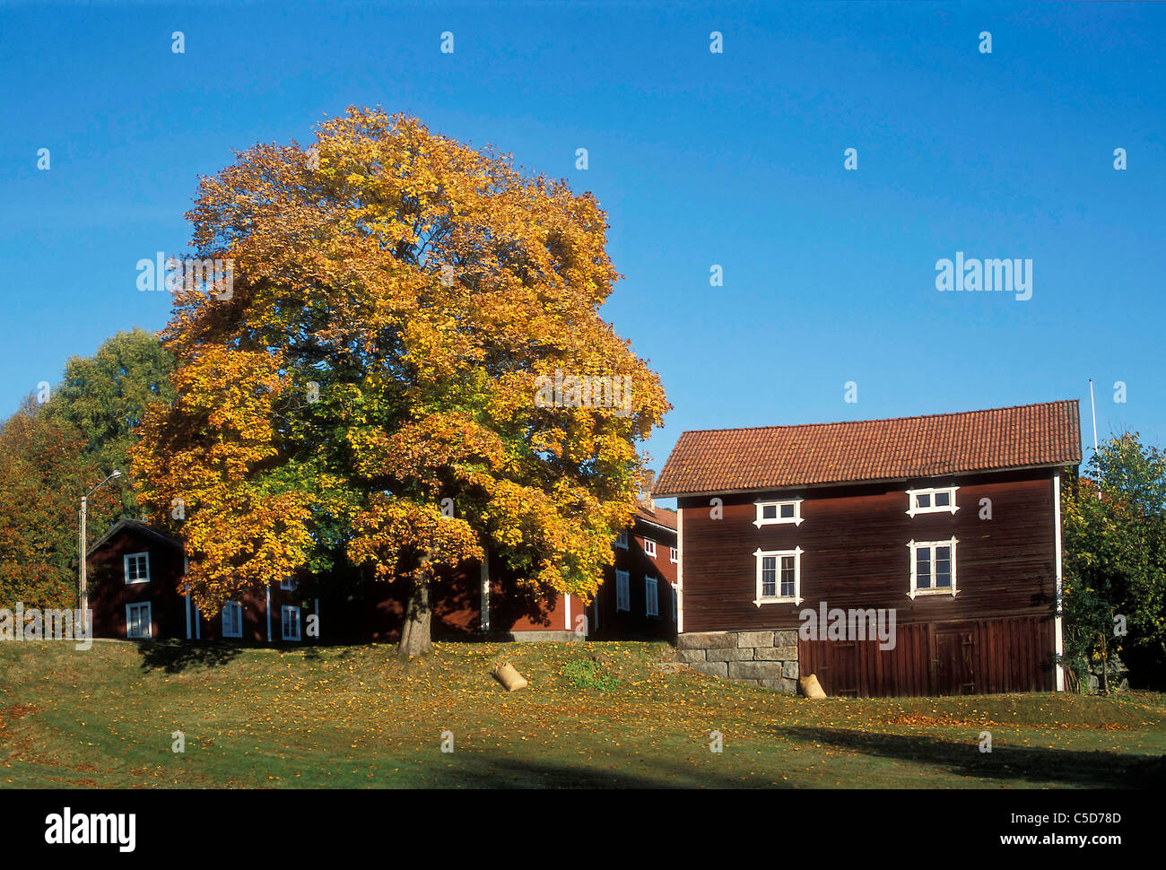 Autumnal tree on lawn by country houses against clear blue sky - Stock Image