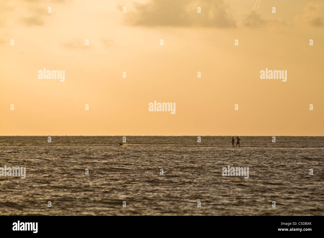 A couple and their dog walk on a sand bar in the gulf of Mexico off Florida's Southwest coast near Marco Island - Stock Image