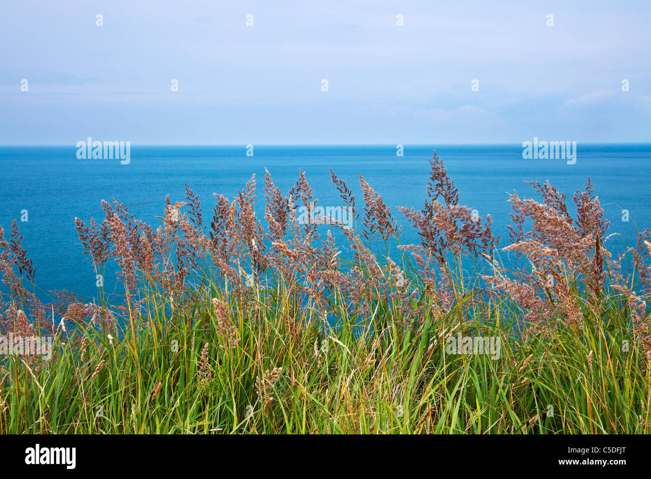 A simple image of coastal grasses with the blue sea and horizon beyond. - Stock Image