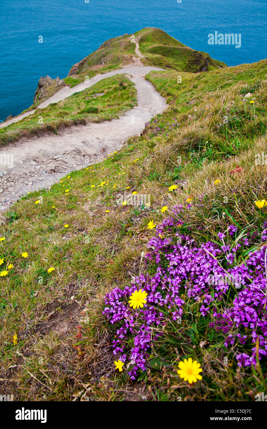 View of Baggy Point a headland near Croyde, North Devon, England, UK - Stock Image