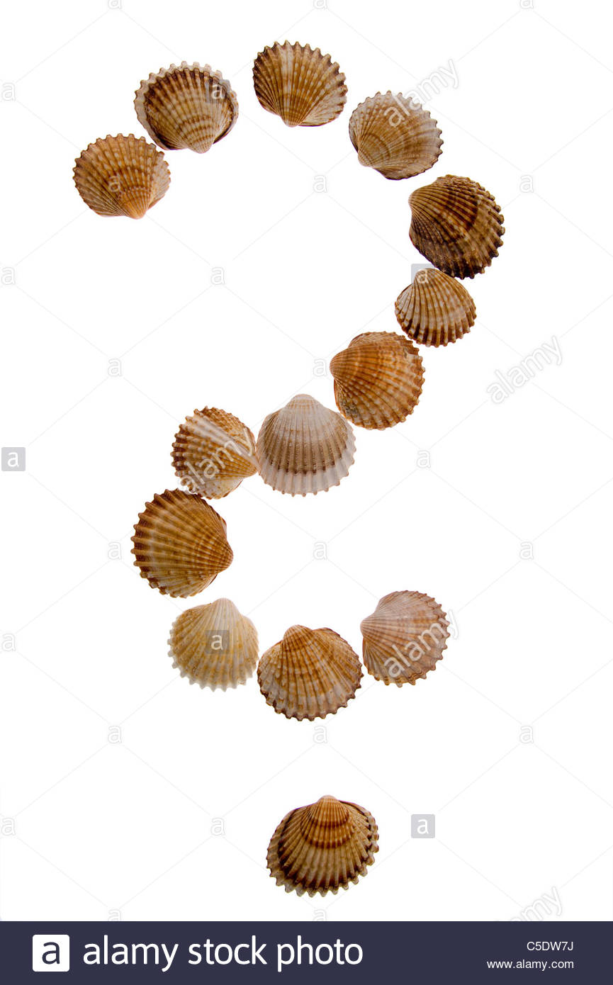 isolated on white - shell Question mark. - Stock Image