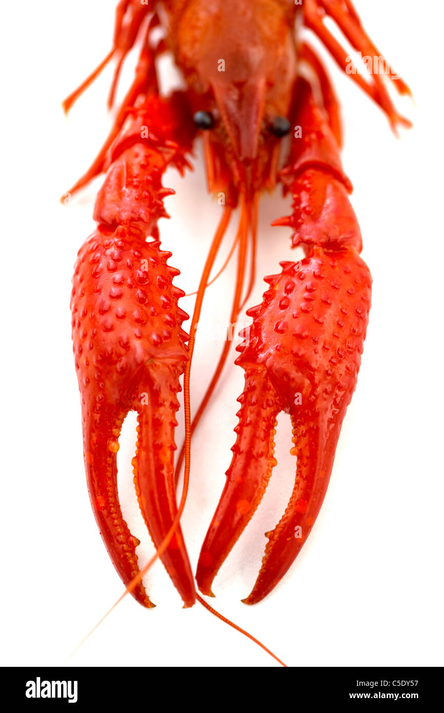 Close-up of lobster claws against white background - Stock Image