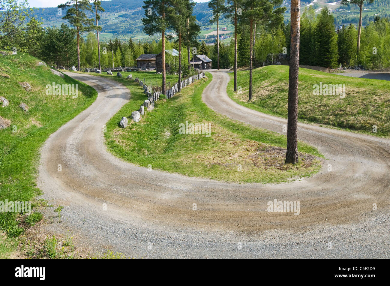 Beautiful view of birch trees along winding country road - Stock Image