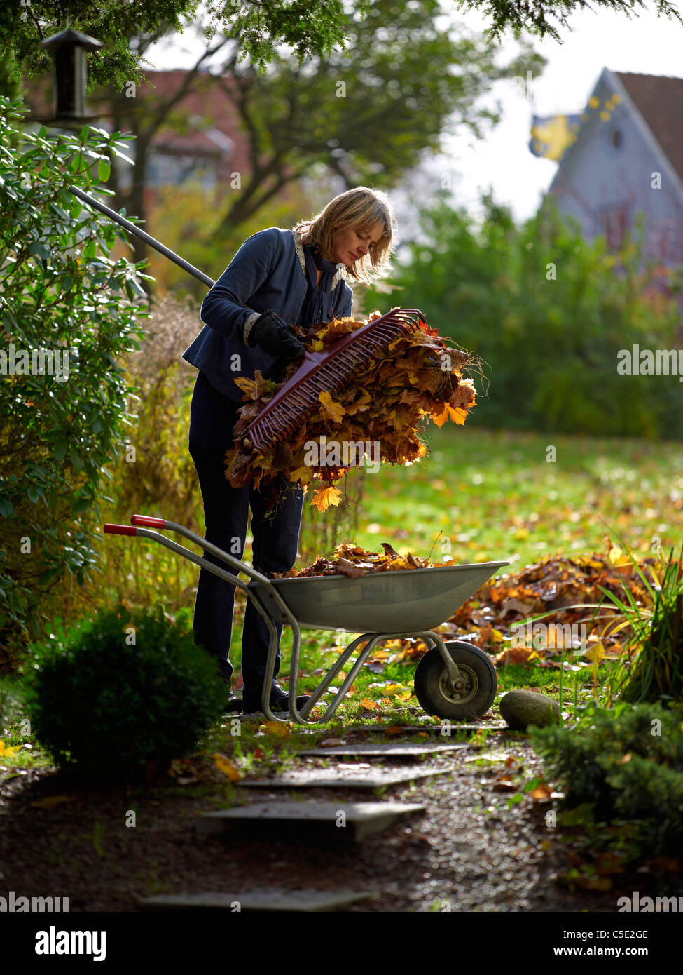Young woman with rake dumping autumnal leaves in a wheelbarrow at the garden - Stock Image
